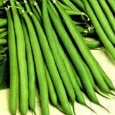 Dwarf French Bean Stanley - appx 100 seeds